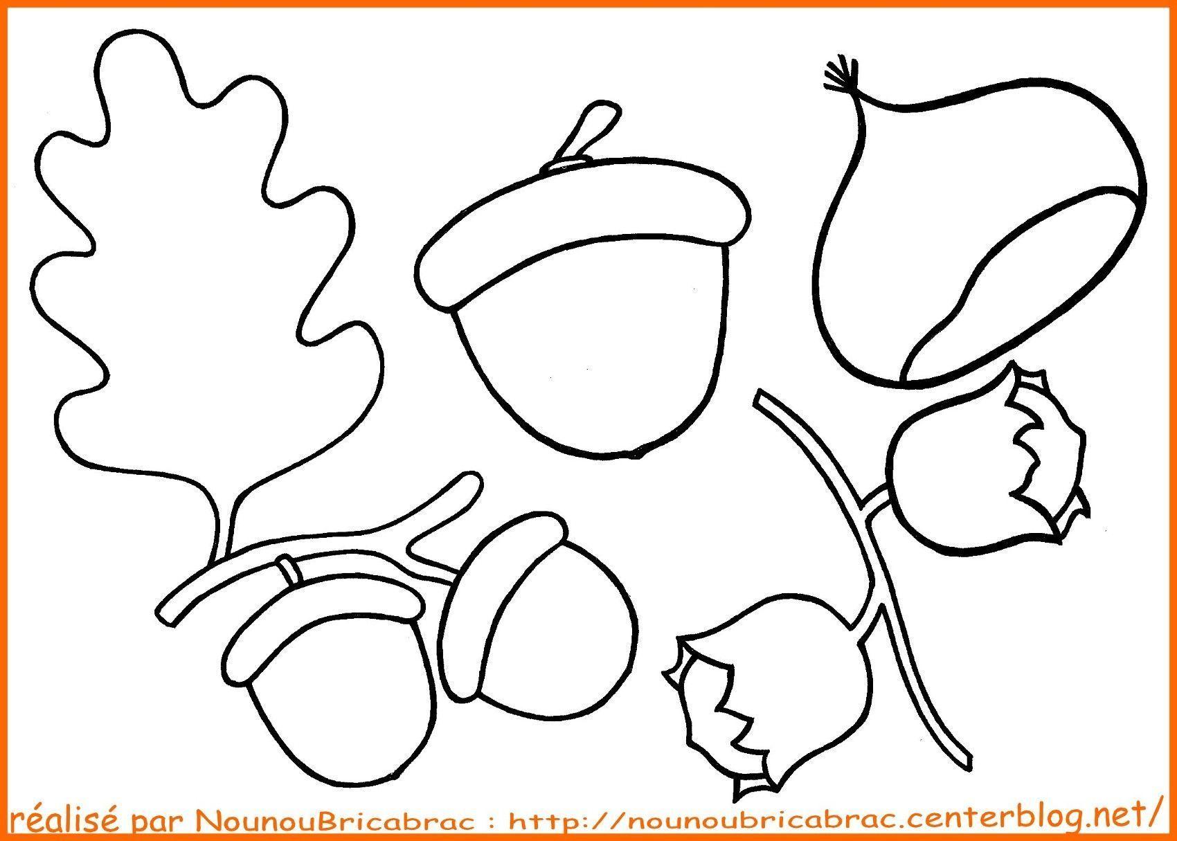 Glands, Châtaigne et noisettes... à colorier
