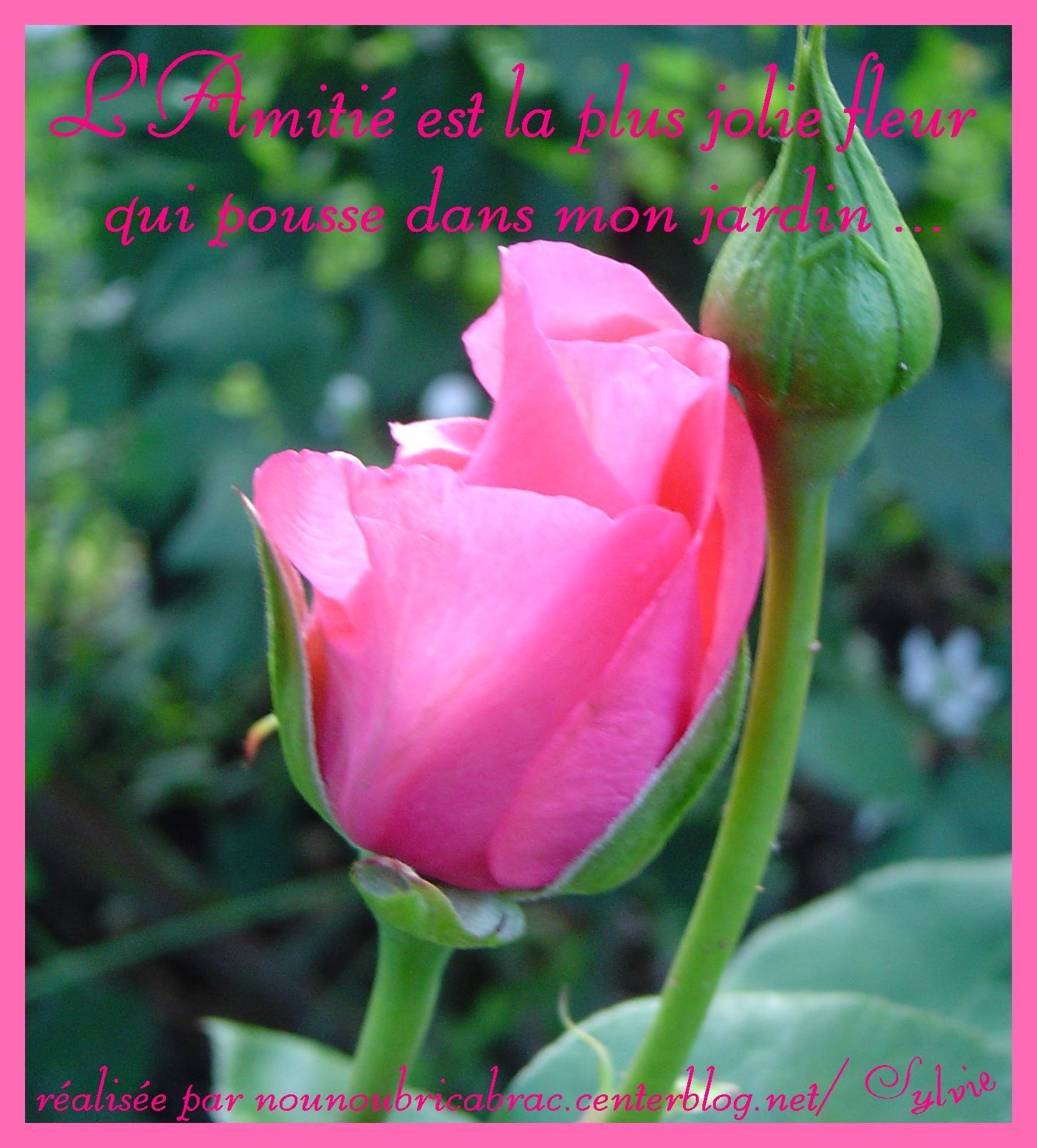 L'amitié est la plus jolie fleur...